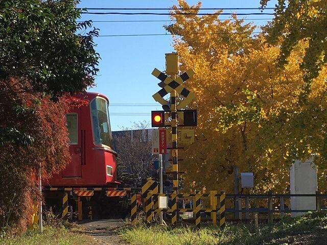 稲沢市祖父江町のイチョウと名鉄電車