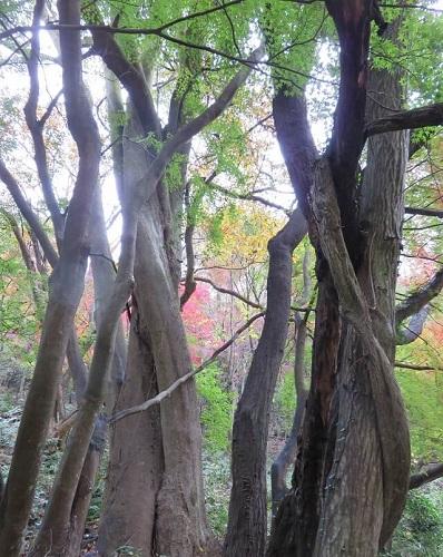 愛岐トンネル群の三位一体の樹