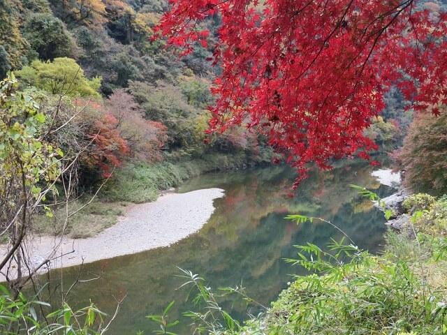 愛岐トンネル群の大モミジと、川面に映る木々