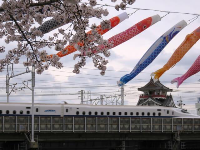 愛知県清須市の清洲城と桜と鯉のぼり