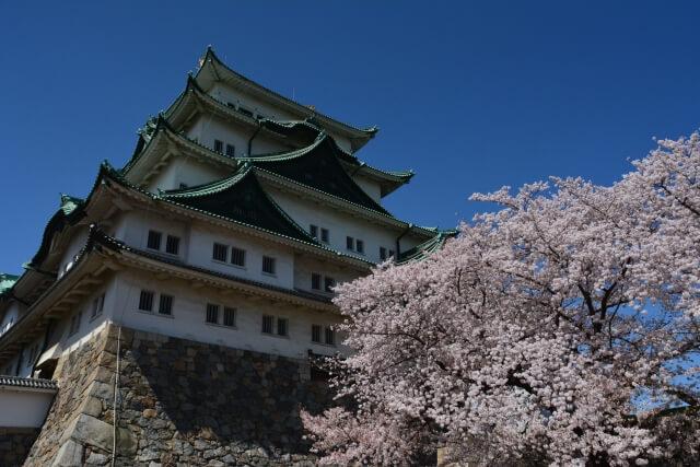名古屋城と桜