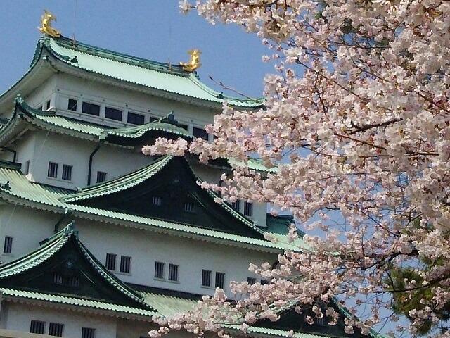 名古屋城と桜のコラボ