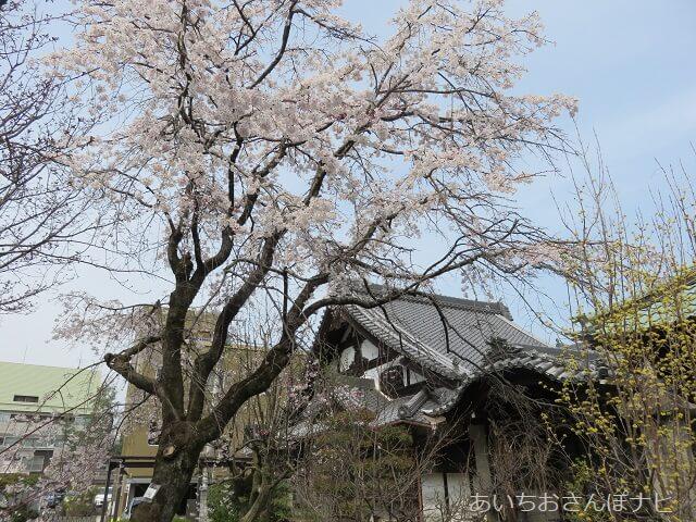 岐阜県岐阜市常在寺の境内