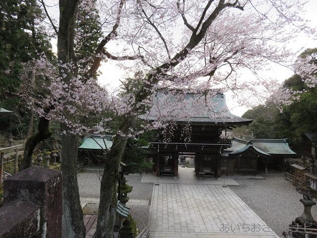 岐阜伊奈波神社の桜が咲く境内