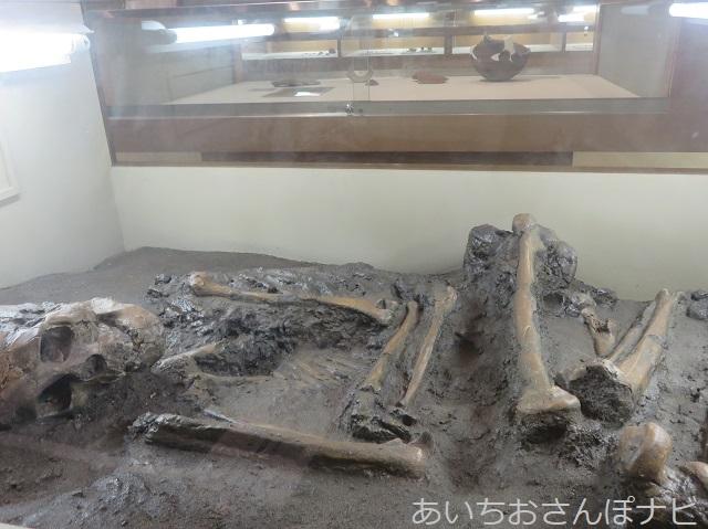 清須市のあいち朝日遺跡ミュージアムの出土した骨