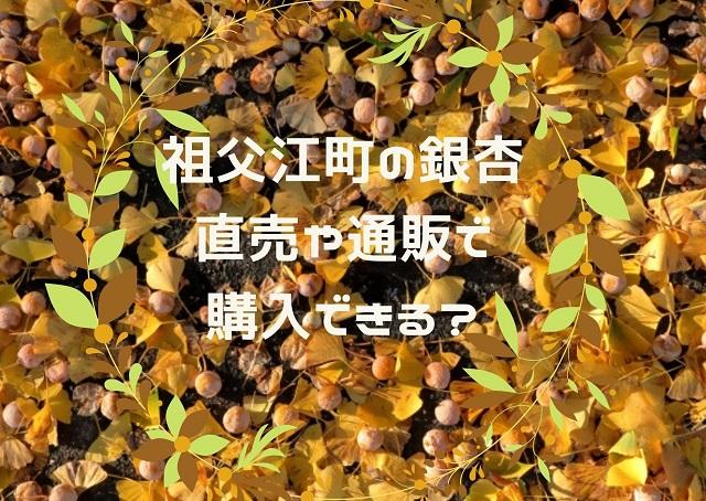 愛知県稲沢市の銀杏
