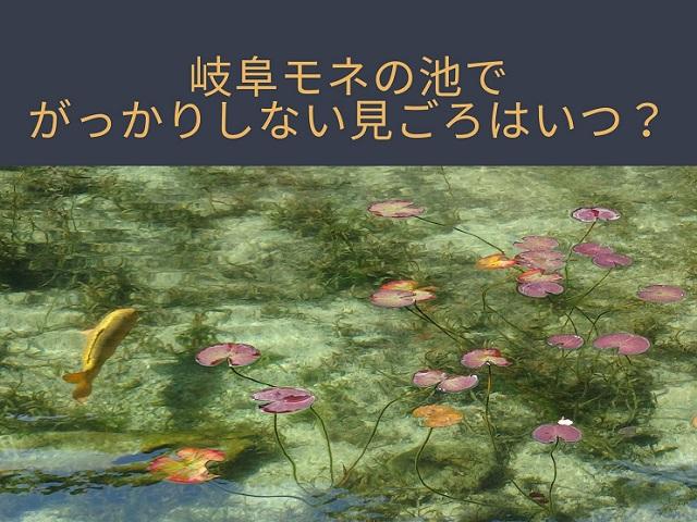 岐阜県関市モネの池