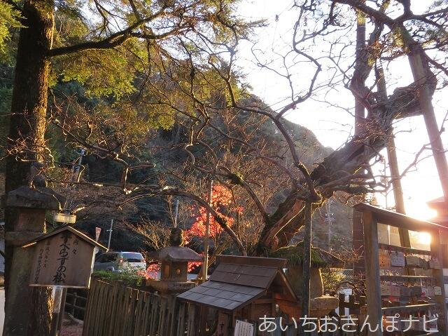 愛知県春日井市内々神社のすべらずの松