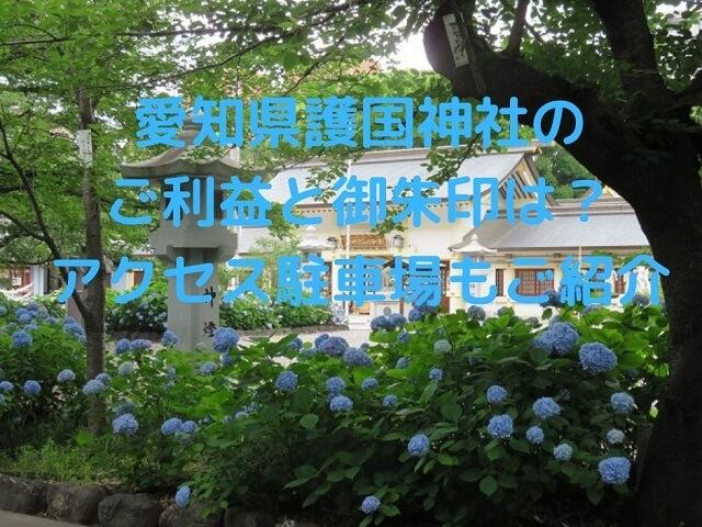 愛知県護国神社のアジサイ