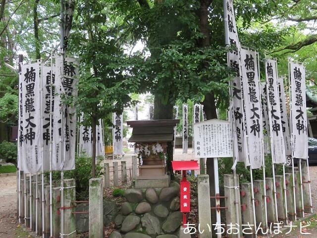 名古屋市中区闇之森八幡社の楠黒龍大神
